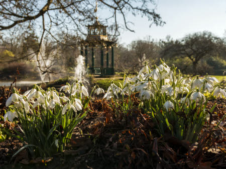This image has an empty alt attribute; its file name is SNOWDROPS-1-©National-Trust-ImagesHugh-Mothersole.jpg