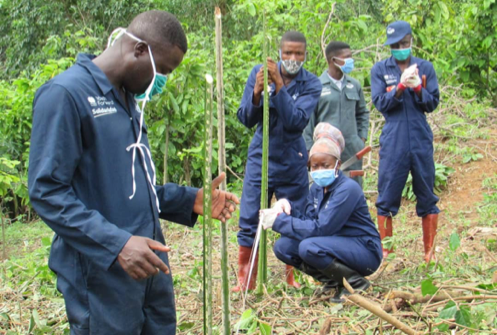 Boost for cocoa's future  …MASO readies over 12,000 youth to take over from aging farmers
