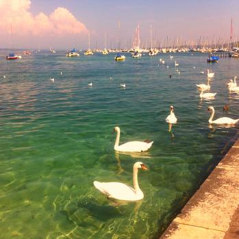 Lake, swans, boats