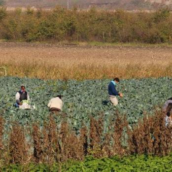Field workers.