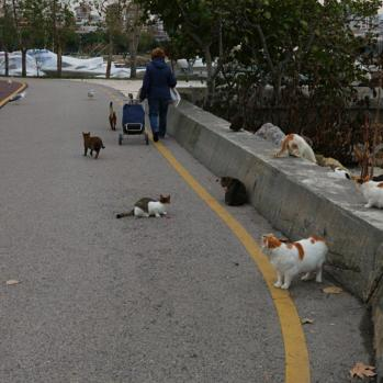 Europe's plague of mutts replaced by Asia's feline epidemic. Quite literally everywhere.