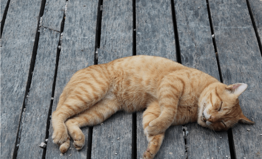 Why do cats roll around?