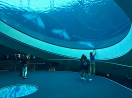 Frost Science Museum - 1 (29)