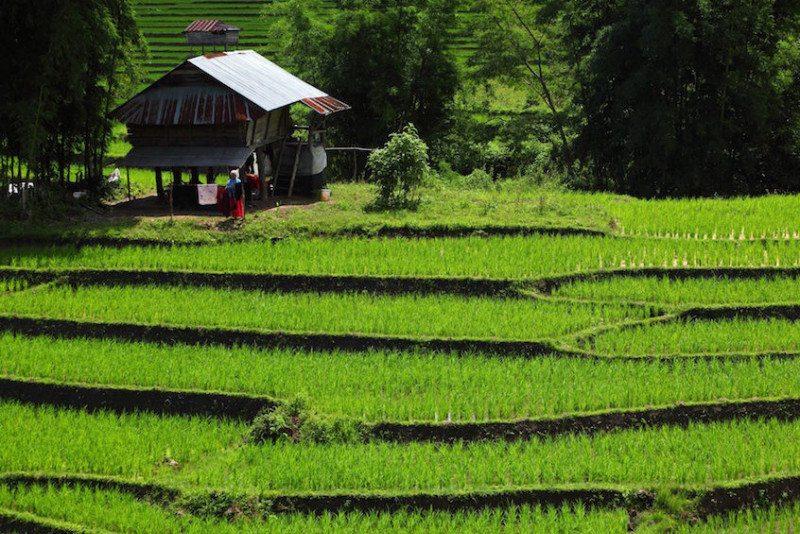 Ten top things to do in Chiang Mai