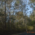 The bush is think in this part of the Sunny Coast