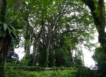 Trunk art - Tree art