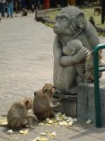 Monkeys at Phra Kahn Shrine