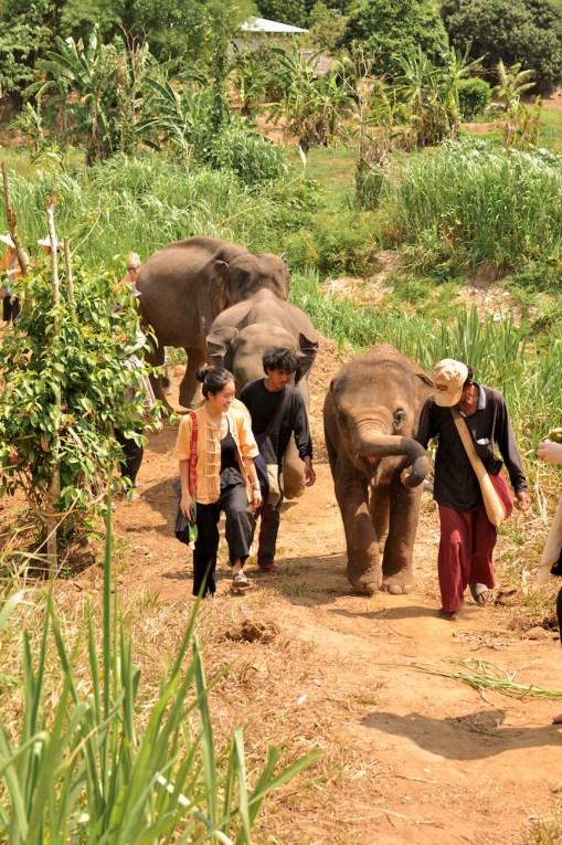 Chiang Mai Thailand Elephant Nature Park Hike