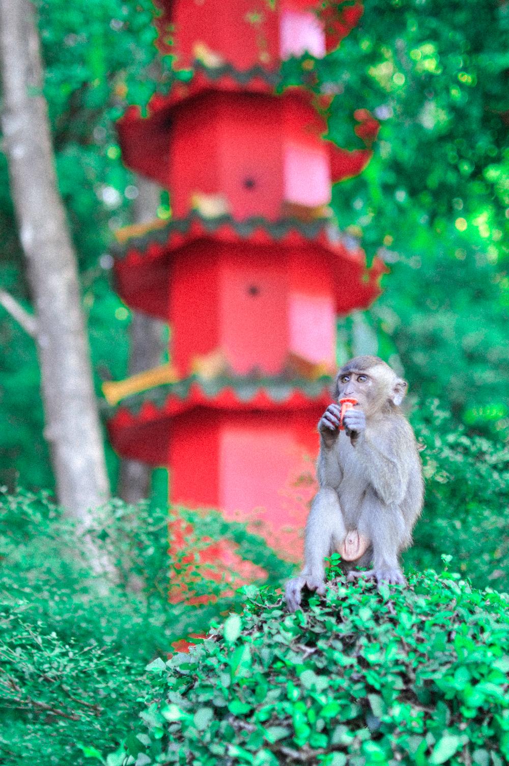 Thailand Krabi Tiger Temple