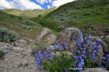 Upper Hulls Gulch Trail.