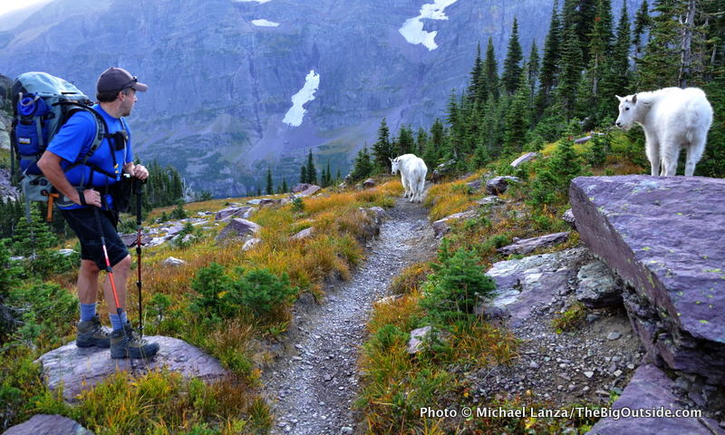 A backpacker and mountain goats on the Gunsight Pass Trail in Glacier National Park.