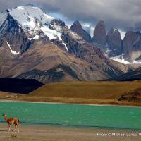 Guanaco in Torres del Paine.
