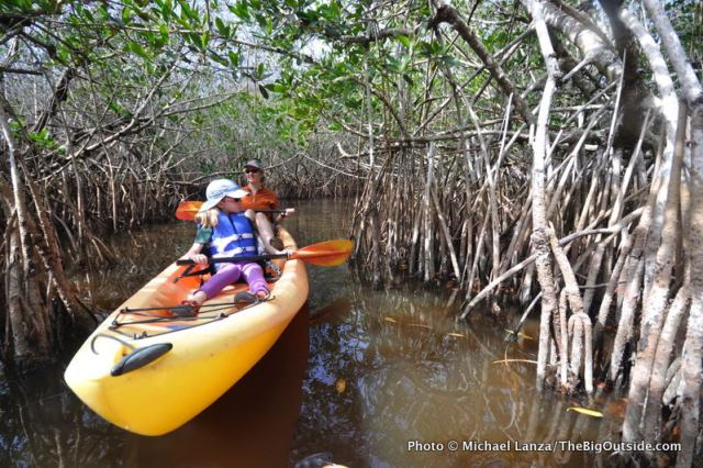 A mangrove tunnel on the East River.
