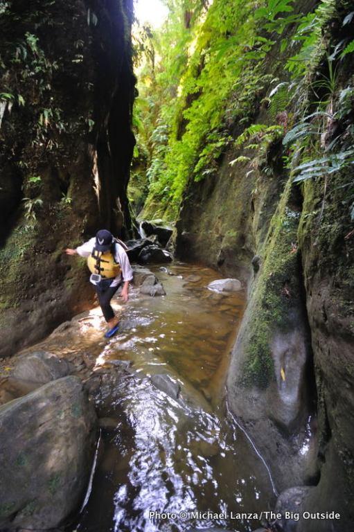 Side canyon, Whanganui River.