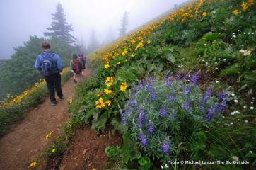 Dog Mountain Trail, Columbia Gorge, WA.
