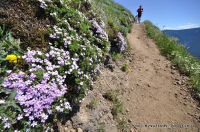 Phlox on Dog Mountain.