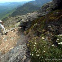 Garfield Ridge Trail, White Mountains.
