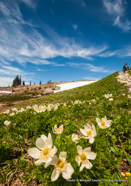 Above Paradise at Mount Rainier N.P.