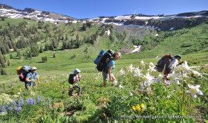 Columbine and backpackers, Death Canyon.