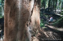 Redwood Meadow Grove, Sequoia N.P.
