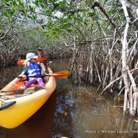 Paddling through a mangrove tunnel on the East River, on the edge of Florida's Everglades.
