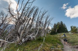 Gnarl Ridge, Timberline Trail.