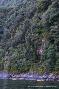 Kayaking Milford Sound.
