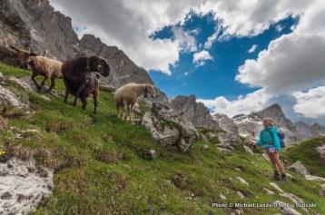 Trekking in Parco Naturale Paneveggio Pale di San Martino, Dolomite Mountains, Italy.