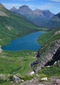 Mountain goat along Gunsight Pass Trail, Glacier National Park.