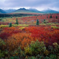 Tundra in autumn, Denali National Park, Alaska.