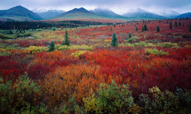 Photographing All 59 National Parks: 5 Top Tips From QT Luong