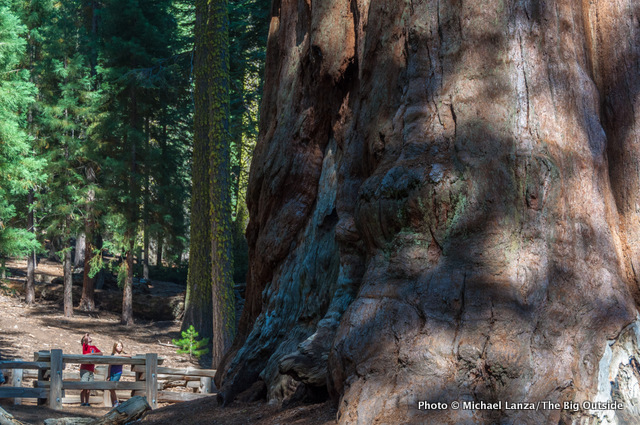 General Sherman Tree in the Giant Forest at Sequoia National Park.