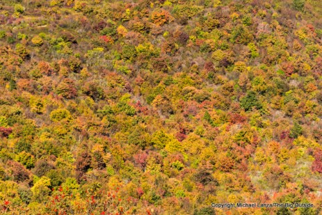 Fall foliage seen from the Art Loeb Trail, Pisgah National Forest, N.C.