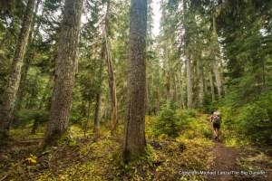 Easy Pass Trail, North Cascades N.P.