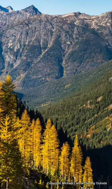 Larch trees near Rainbow Pass, Lake Chelan National Recreation Area.