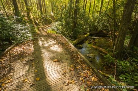 Bear Creek Trail, Great Smoky Mountains.