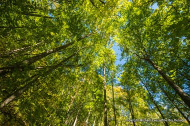 Along the Bear Creek Trail, Great Smoky Mountains.