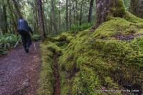 Hiking the Kepler Track, Fiordland National Park, New Zealand.