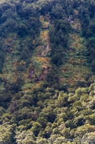Tree avalanche scars in Iris Burn, Kepler Track, Fiordland National Park.