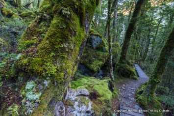 Kepler Track, Iris Burn Valley, Fiordland National Park.