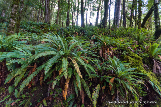 Along the Kepler Track, Iris Burn Valley, Fiordland National Park.