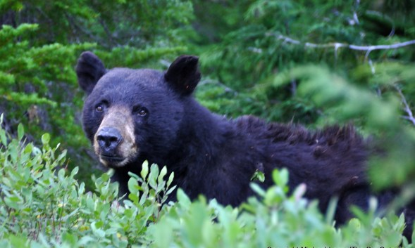 Ask Me: Should I Hike or Backpack Solo in Bear Country?
