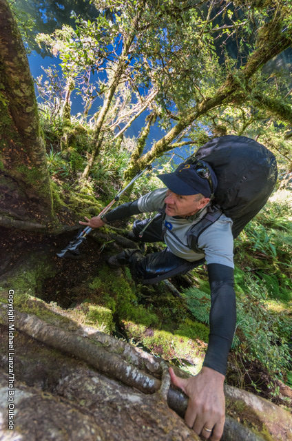 """A hiker ascending a """"root ladder"""" on the Dusky Track in New Zealand's Fiordland National Park."""