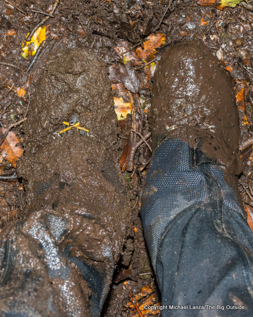 A hiker's muddy boots on the Dusky Track, Fiordland National Park, New Zealand.