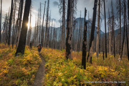 A backpacker in burned forest, Saint Mary Valley, Glacier National Park.