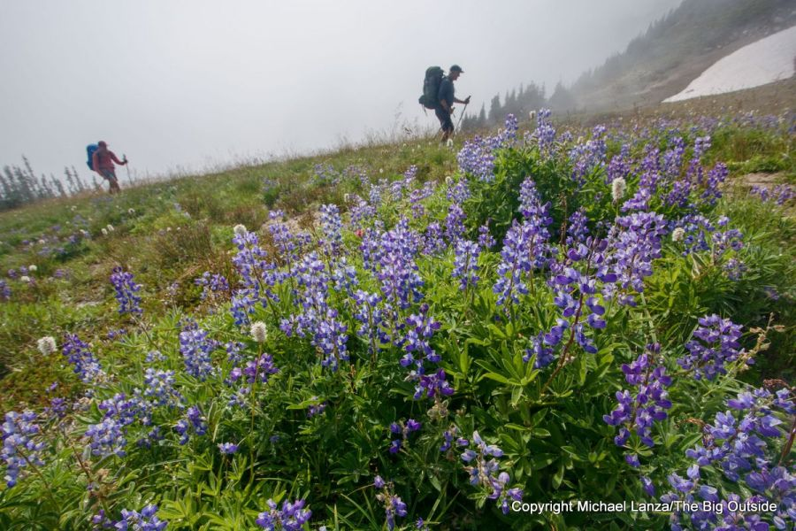 Backpackers and lupine on the Wonderland Trail in Mount Rainier National Park.