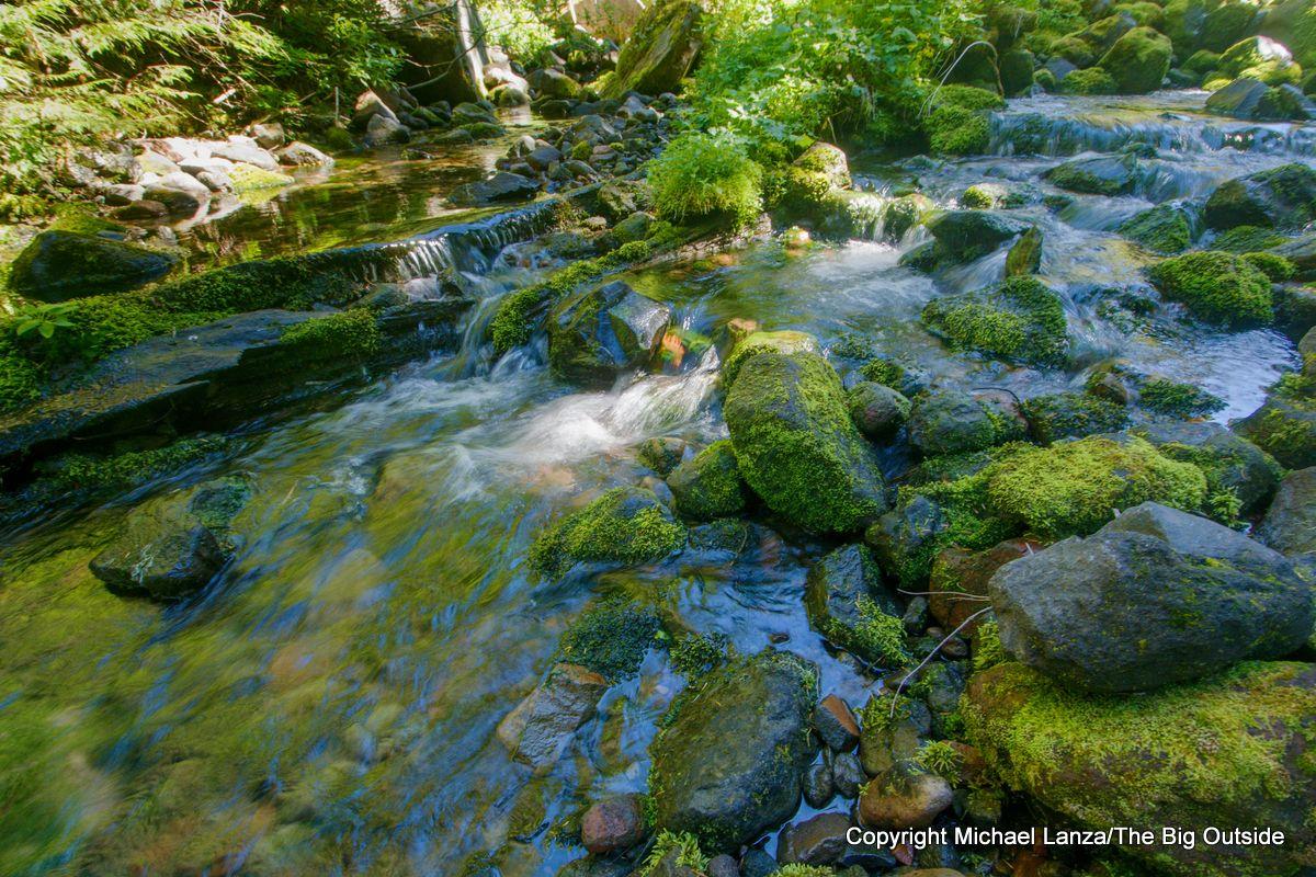 Moraine Creek along the Wonderland Trail, Mount Rainier National Park.