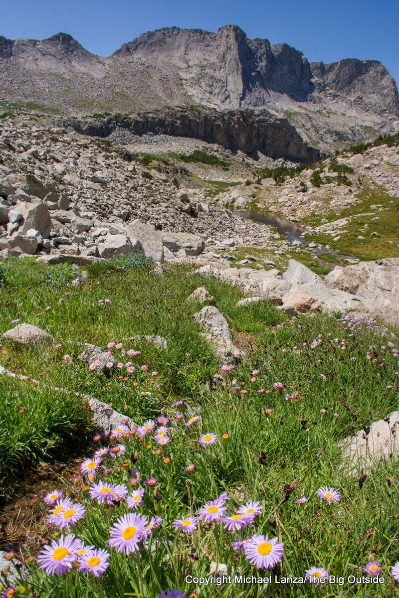 Wildflowers in the Black Joe Creek Valley on the Wind River High Route.