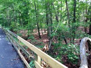 Along the trail path