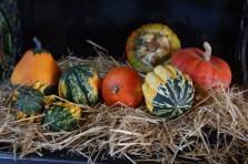 Pumpkins and their friends